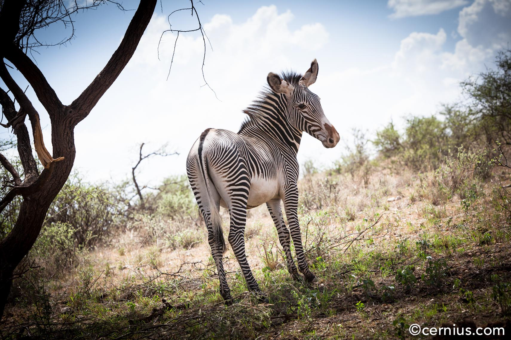 Animals | Zebra, Kenya