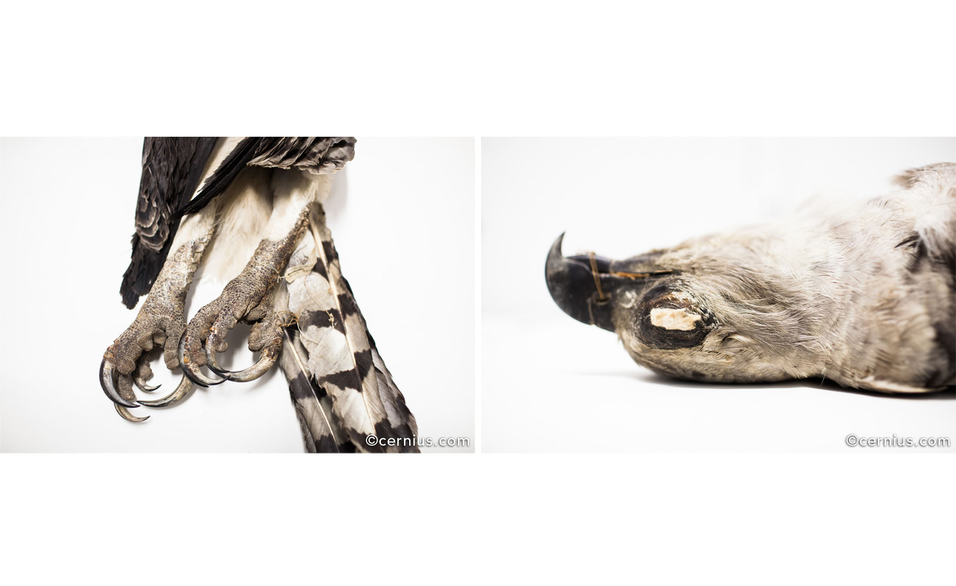Natural History Stillness | Juozas Cernius